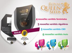 graines royal queen pas chères